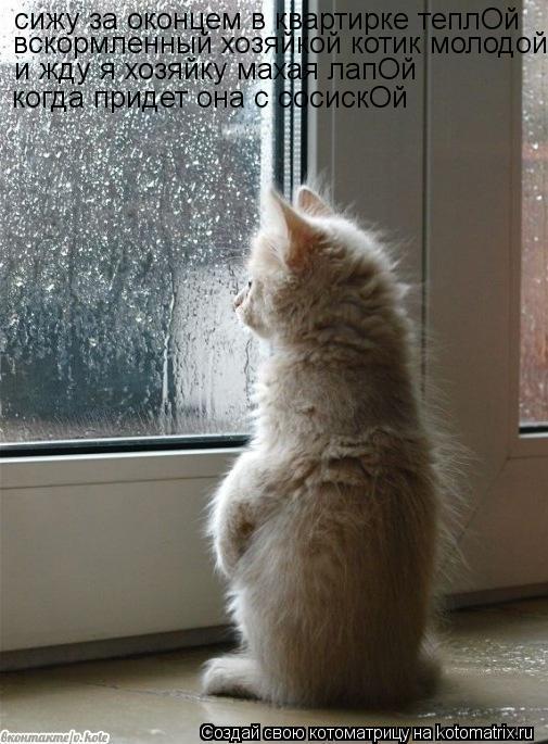 Котоматрица: сижу за оконцем в квартирке теплОй вскормленный хозяйкой котик молодойдой и жду я хозяйку махая лапОй когда придет она с сосискОй