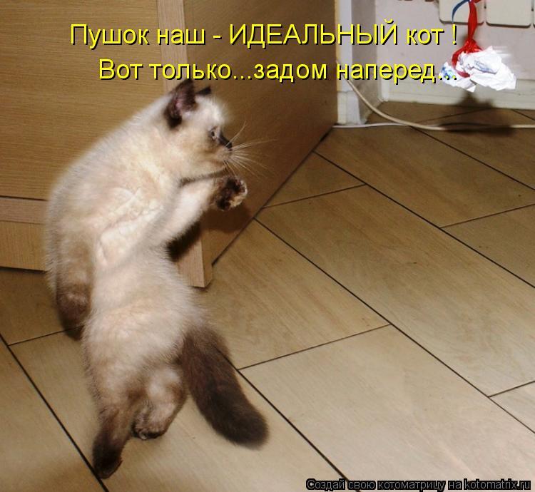 Котоматрица: Вот только...задом наперед... Пушок наш - ИДЕАЛЬНЫЙ кот !