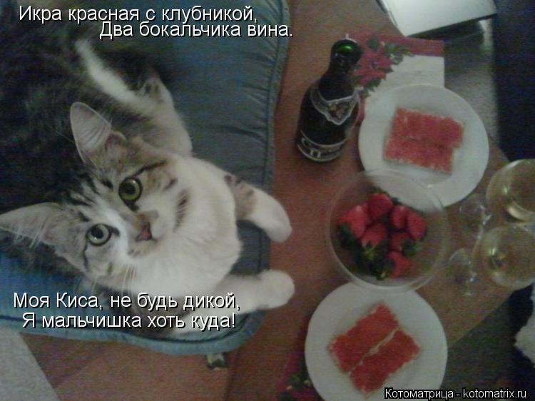 Котоматрица: Икра красная с клубникой,  Два бокальчика вина. Два бокальчика вина. Моя Киса, не будь дикой, Я мальчишка хоть куда!