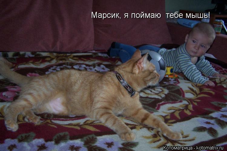 Котоматрица: Марсик, я поймаю  тебе мышь!