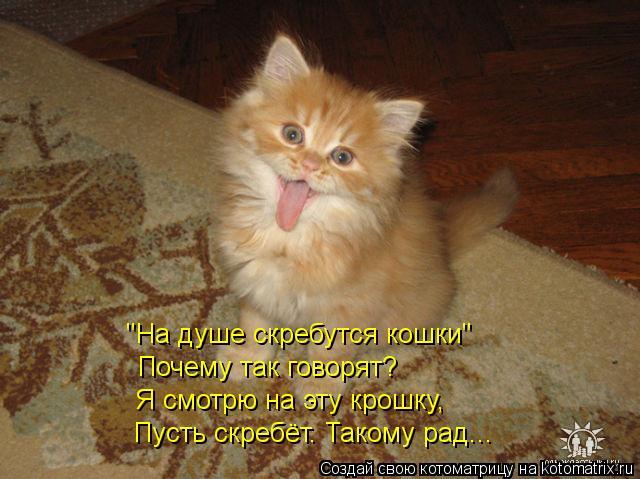"""Котоматрица: """"На душе скребутся кошки"""" Почему так говорят? Я смотрю на эту крошку, Пусть скребёт. Такому рад..."""