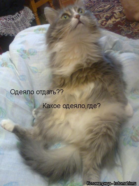 Котоматрица: Одеяло отдать?? Какое одеяло,где?