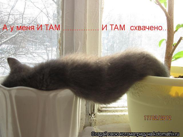 Котоматрица: А у меня И ТАМ ................ И ТАМ  схвачено...