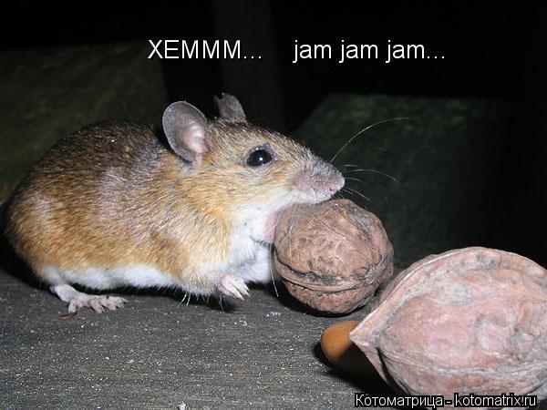 Котоматрица: XEMMM...    jam jam jam...