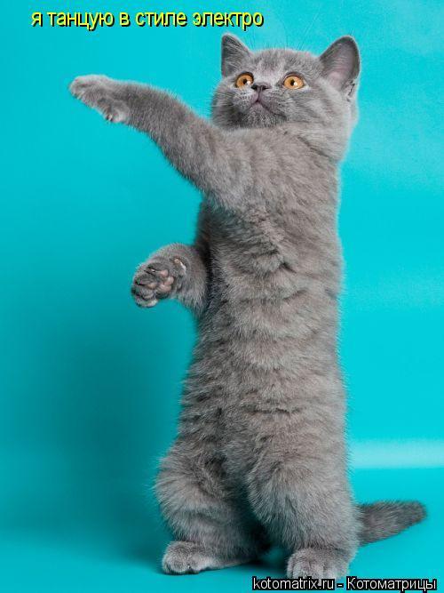 Котоматрица: я танцую в стиле электро