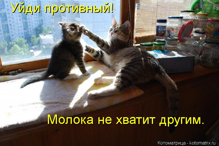 Котоматрица: Уйди противный! Молока не хватит другим.