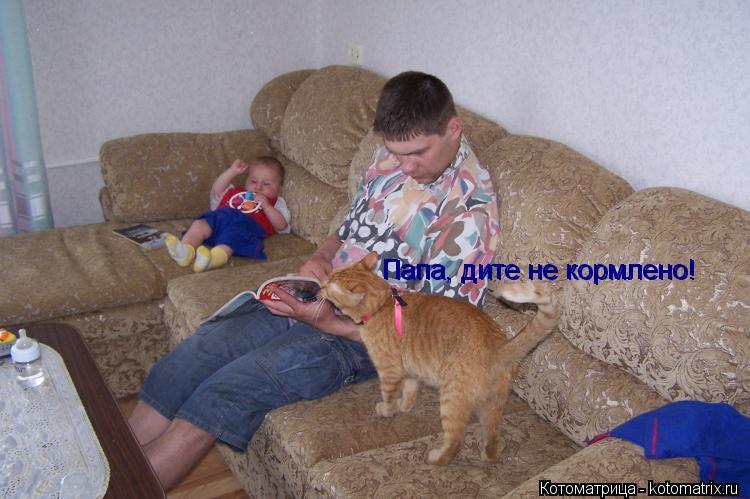 Котоматрица: Папа, дите не кормлено! Папа, дите не кормлено!