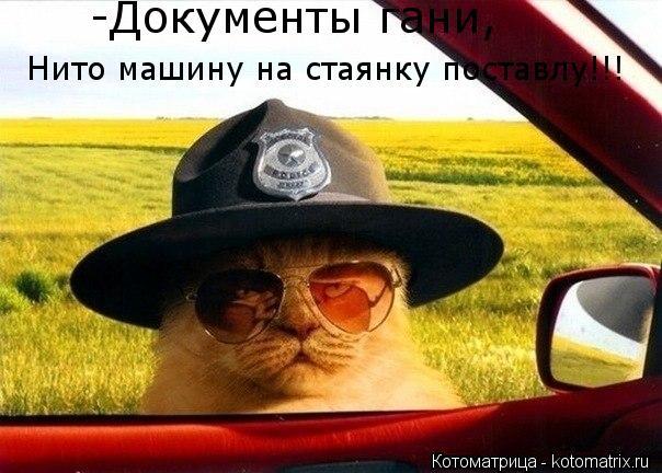Котоматрица: Нито машину на стаянку поставлу!!! -Документы гани,
