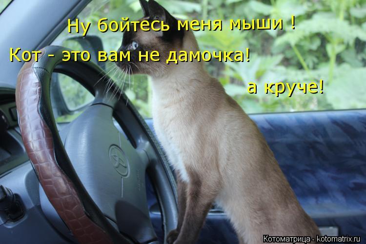 Котоматрица: Ну бойтесь меня мыши ! Кот - это вам не дамочка! а круче!