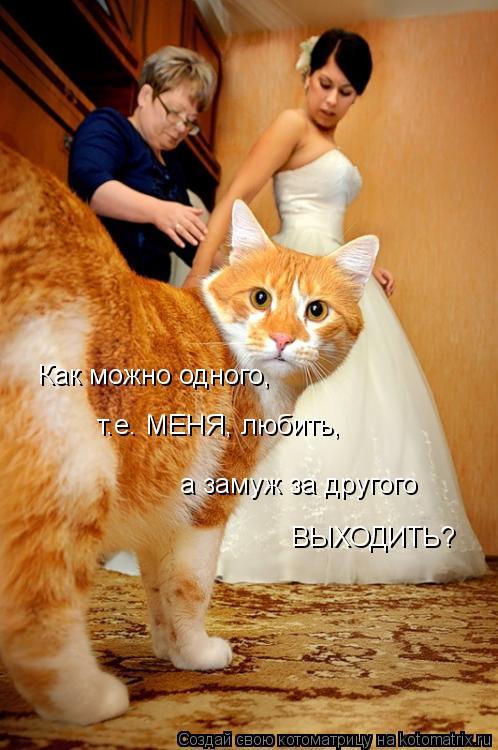 Котоматрица: Как можно одного, т.е. МЕНЯ, любить, а замуж за другого ВЫХОДИТЬ?