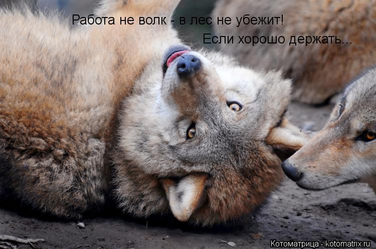 Котоматрица: Работа не волк - в лес не убежит! Если хорошо держать...