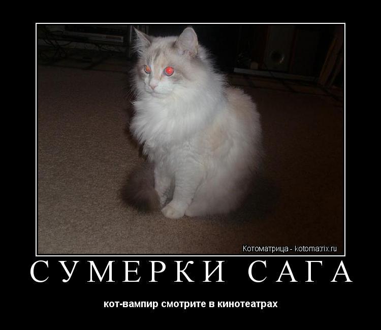 Котоматрица: Сумерки сага кот-вампир смотрите в кинотеатрах