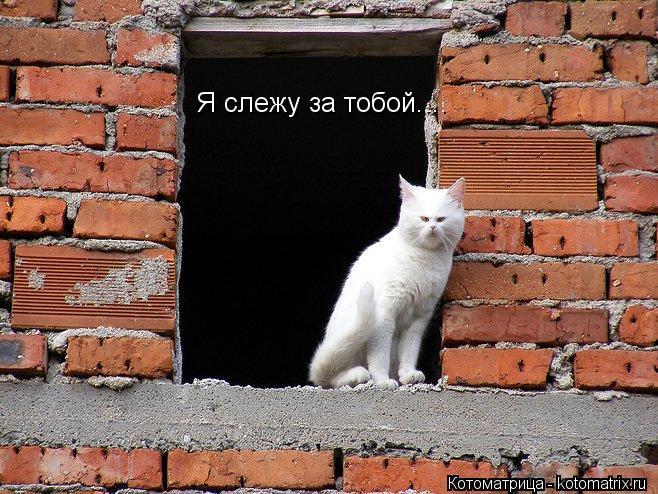 Котоматрица: Я слежу за тобой....