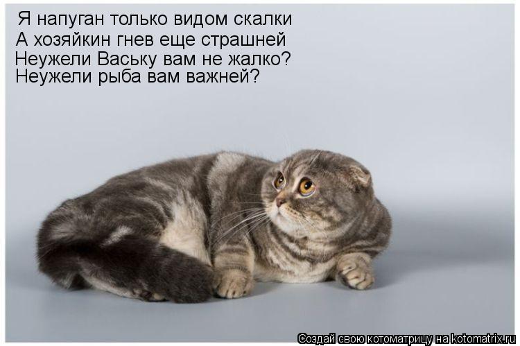 Котоматрица: Я напуган только видом скалки А хозяйкин гнев еще страшней Неужели Ваську вам не жалко? Неужели рыба вам важней?