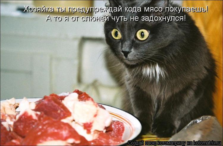 Котоматрица: Хозяйка ты предупреждай кода мясо покупаешь!   А то я от слюней чуть не задохнулся!