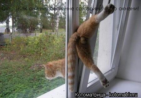 Котоматрица: Ох.....Как они надоели мне со своими евро окнами!