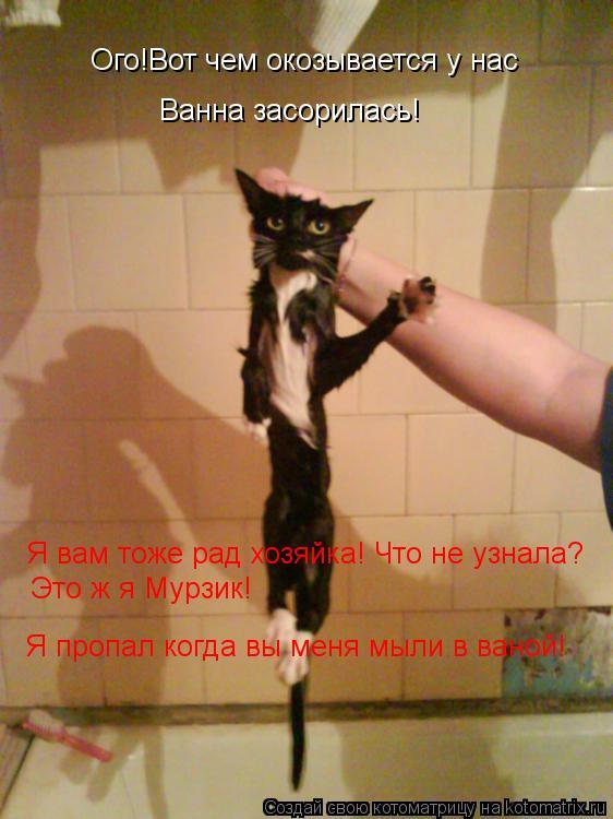 Котоматрица: Ого!Вот чем окозывается у нас Ванна засорилась! Я вам тоже рад хозяйка! Что не узнала? Это ж я Мурзик! Я пропал когда вы меня мыли в ваной!