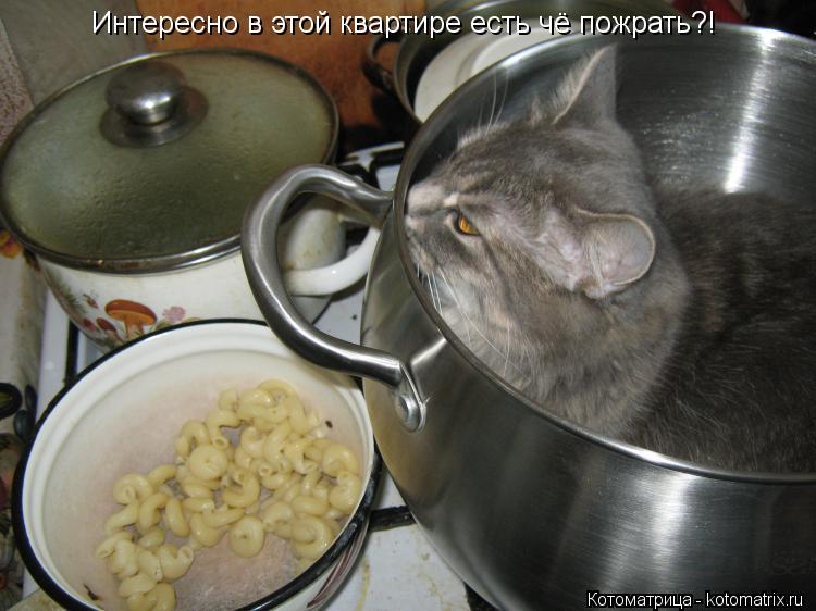 Котоматрица: Интересно в этой квартире есть чё пожрать?!