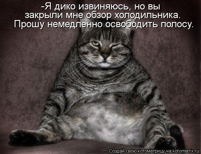 Котоматрица: -Я дико извиняюсь, но вы  закрыли мне обзор холодильника. Прошу немедленно освободить полосу.