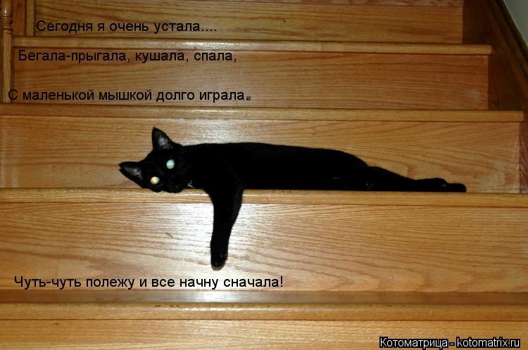 Котоматрица: Сегодня я очень устала....  Бегала-прыгала, кушала, спала, С маленькой мышкой долго играла. Чуть-чуть полежу и все начну сначала!