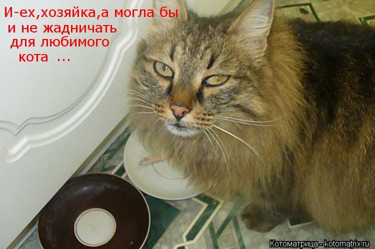 Котоматрица: И-ех,хозяйка,а могла бы   и не жадничать  для любимого   кота  ...
