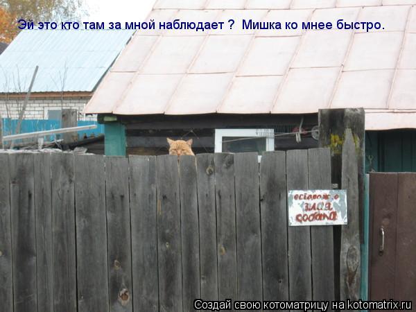 Котоматрица: Эй это кто там за мной наблюдает ?  Мишка ко мнее быстро.