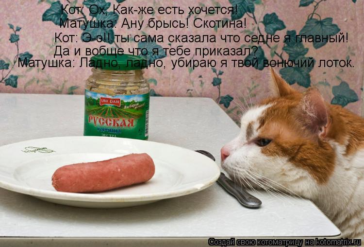 Котоматрица: Кот: Ох, Как-же есть хочется! Матушка: Ану брысь! Скотина! Кот: Э-э!! ты сама сказала что седне я главный!  Да и вобще что я тебе приказал? Матушка