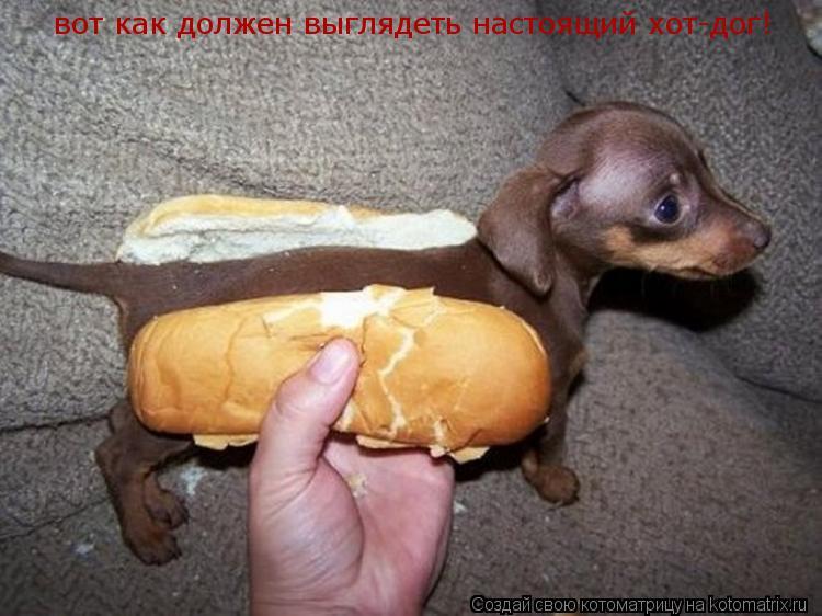 Котоматрица: вот как должен выглядеть настоящий хот-дог!