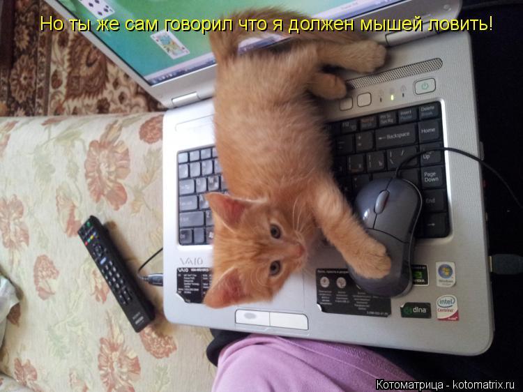 Котоматрица: Но ты же сам говорил что я должен мышей ловить!