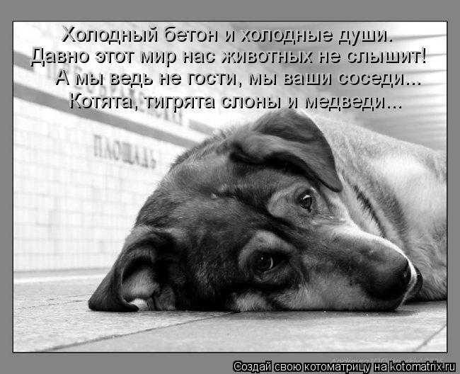 Котоматрица: Холодный бетон и холодные души. Давно этот мир нас животных не слышит! А мы ведь не гости, мы ваши соседи... Котята, тигрята слоны и медведи...