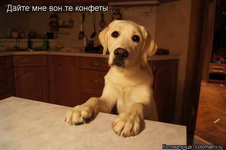 Котоматрица: Дайте мне вон те конфеты...