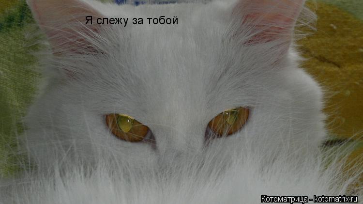 Котоматрица: Я слежу за тобой