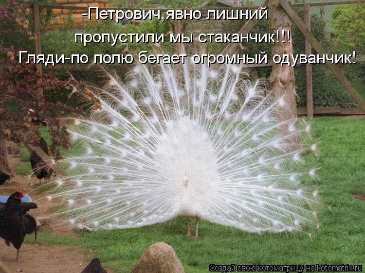 Котоматрица: Гляди-по полю бегает огромный одуванчик! -Петрович,явно лишний  пропустили мы стаканчик!!!