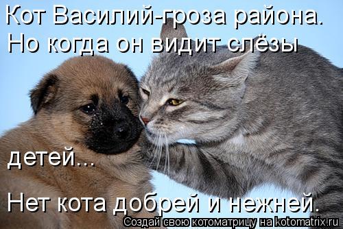 Котоматрица: Кот Василий-гроза района. Но когда он видит слёзы  детей... Нет кота добрей и нежней.