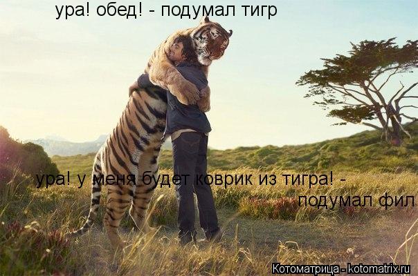 Котоматрица: ура! обед! - подумал тигр ура! у меня будет коврик из тигра! - подумал фил
