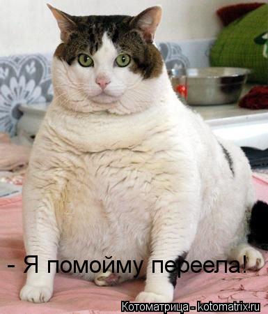 Котоматрица: - Я помойму переела!