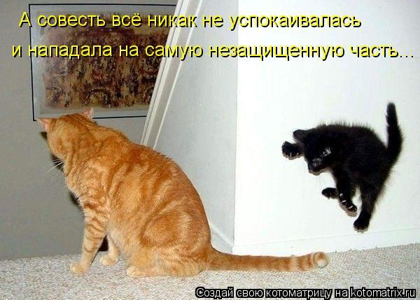 Котоматрица: А совесть всё никак не успокаивалась и нападала на самую незащищенную часть...