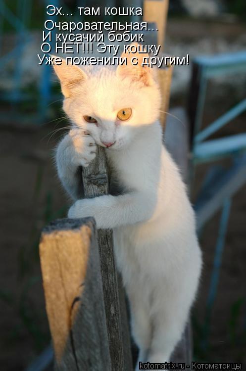 Котоматрица: Эх... там кошка Очаровательная... И кусачий бобик О НЕТ!!! Эту кошку Уже поженили с другим!