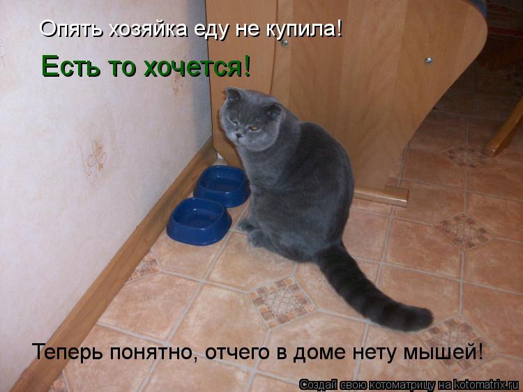 Котоматрица: Есть то хочется! Теперь понятно, отчего в доме нету мышей! Опять хозяйка еду не купила!