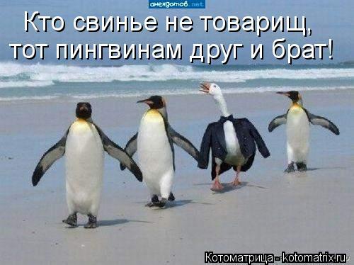 Котоматрица: Кто свинье не товарищ, тот пингвинам друг и брат!