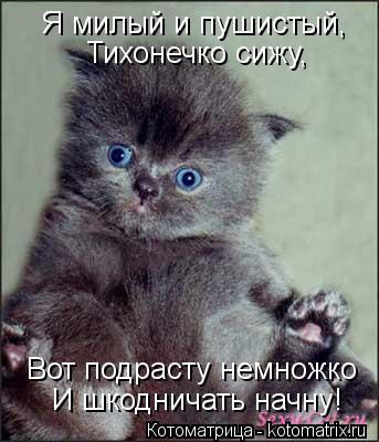 Котоматрица: Я милый и пушистый, Тихонечко сижу, Вот подрасту немножко И шкодничать начну!