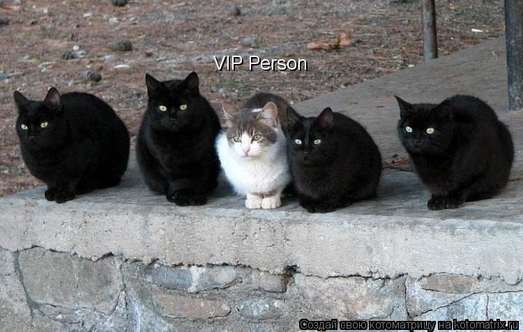 Котоматрица: VIP Person
