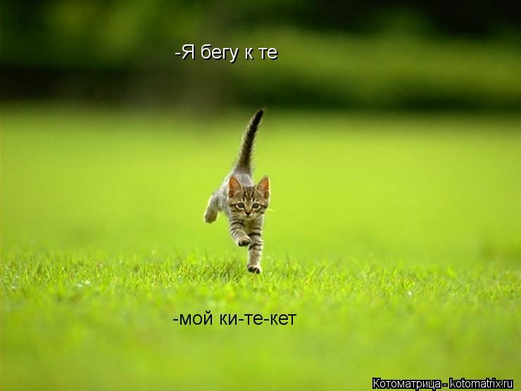 Котоматрица: -Я бегу к те -мой ки-те-кет