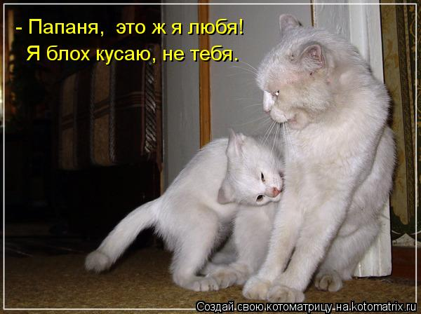 Котоматрица: - Папаня,  это ж я любя!  Я блох кусаю, не тебя.