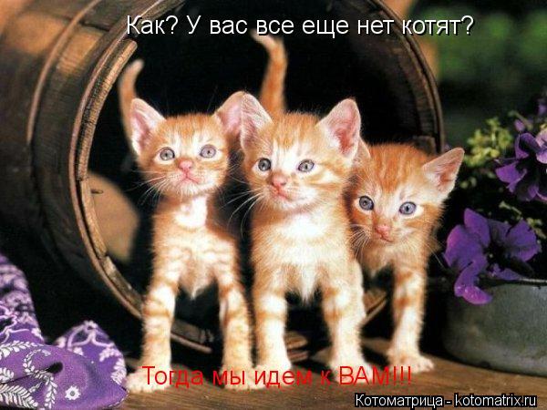 Котоматрица: Как? У вас все еще нет котят? Тогда мы идем к ВАМ!!!