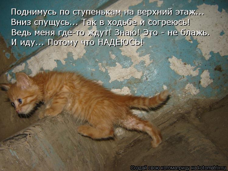 Котоматрица: Поднимусь по ступенькам на верхний этаж..… Вниз спущусь..… Так в ходьбе и согреюсь! Ведь меня где-то ждут! Знаю! Это - не блажь. И иду..… Потому
