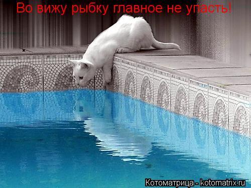 Котоматрица: Во вижу рыбку главное не упасть!