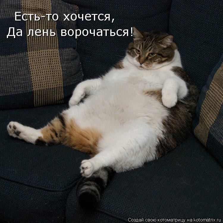 Котоматрица: Есть-то хочется, Да лень ворочаться!
