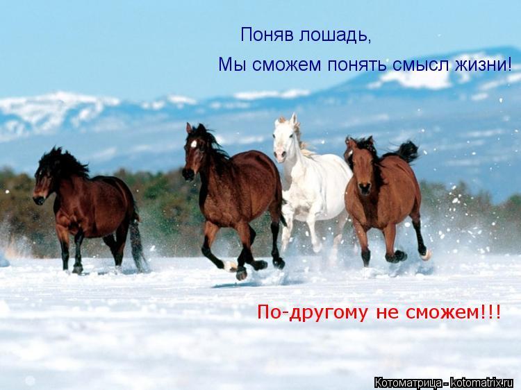 Котоматрица: Поняв лошадь, Мы сможем понять смысл жизни! По-другому не сможем!!!