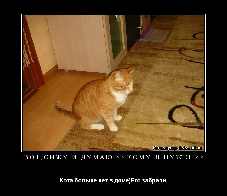 Котоматрица: Вот,сижу и думаю <<Кому Я нужен>> Кота больше нет в доме)Его забрали.